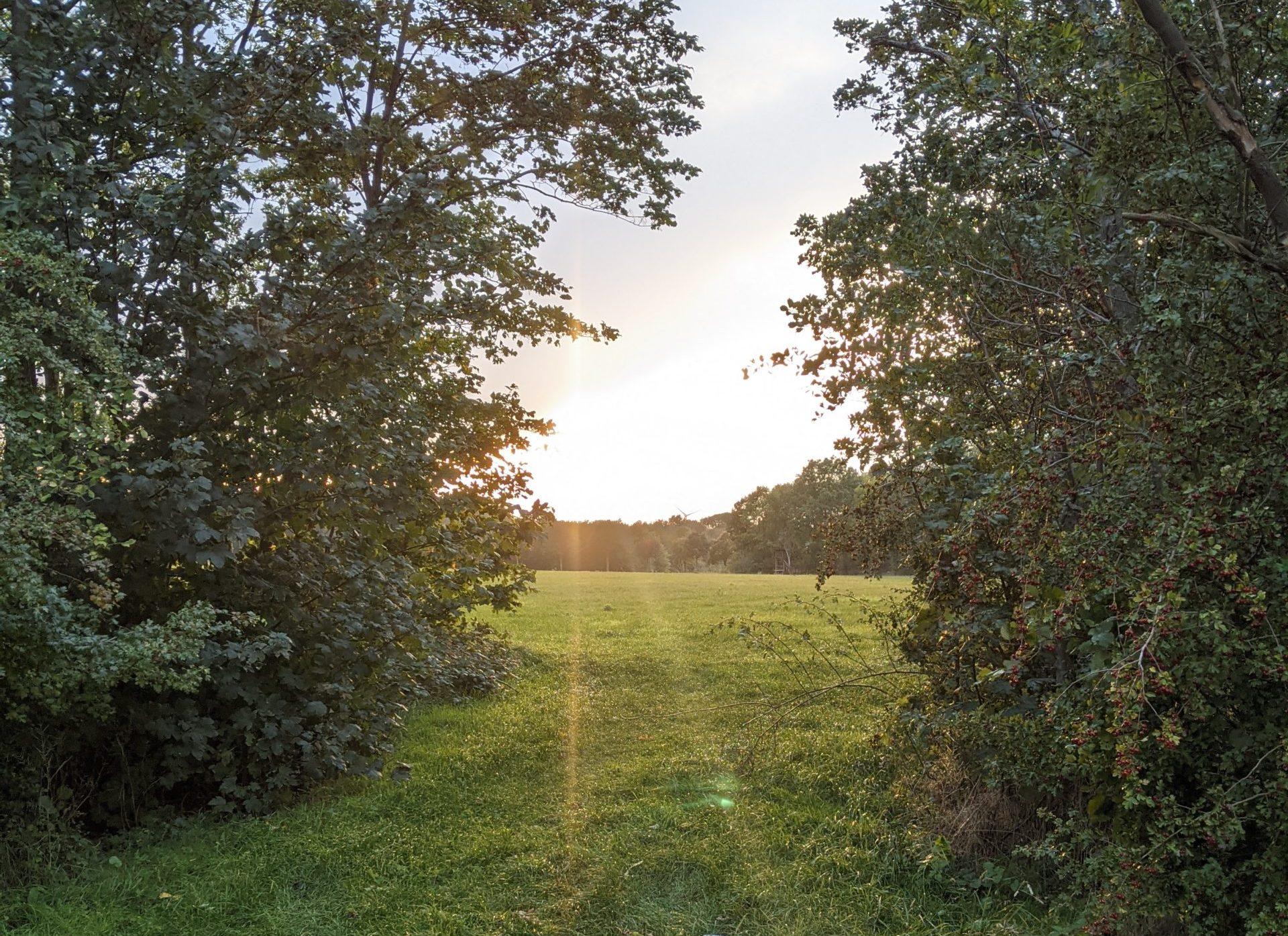 Jog around the blog [390]: Ein Halber geht immer, auch im Oktober